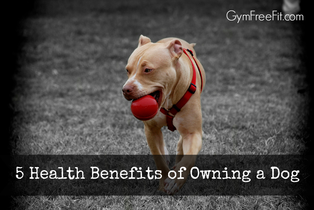 5 Health Benefits of Owning a Dog